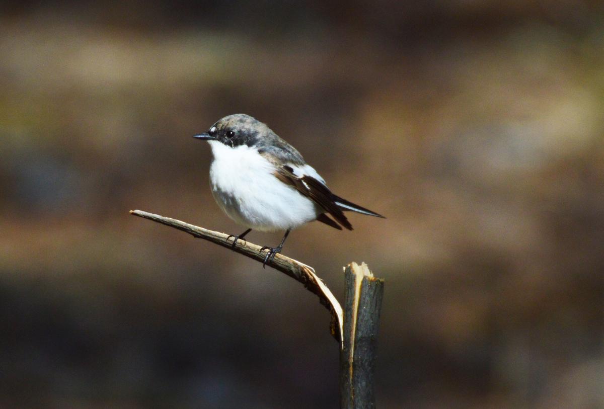 сам себе птицы тюменской области фото и названия предложить сотрудничество дизайнерским