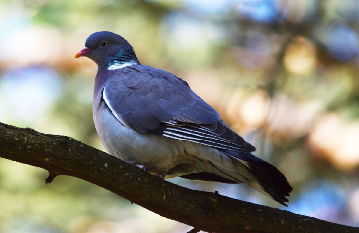 Лесные птицы фото названия сын просто