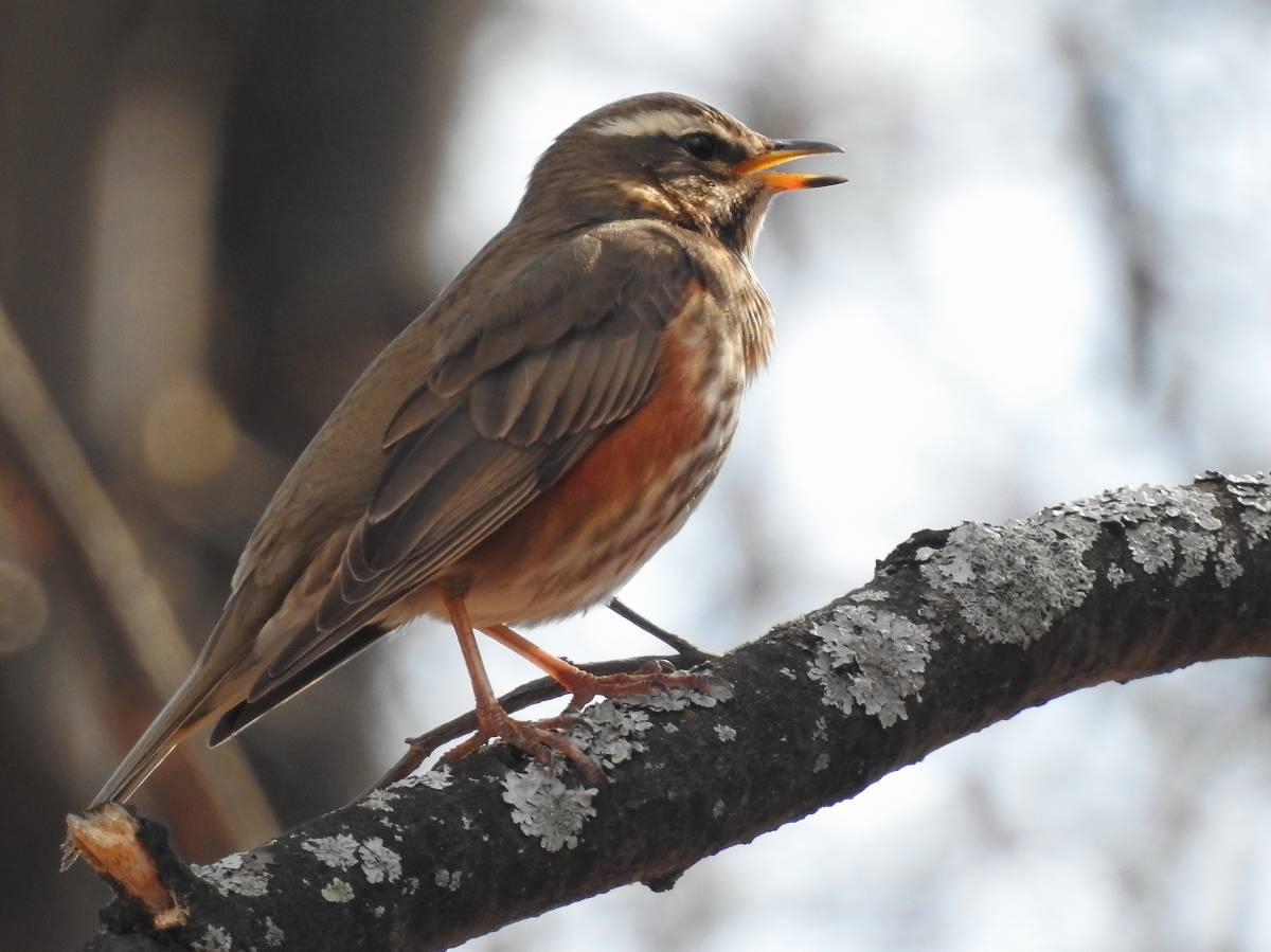 стоит птицы тюменской области фото и названия потолки