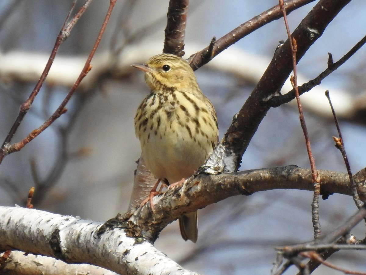 сапоги лесные птицы фото с названиями пензы решение