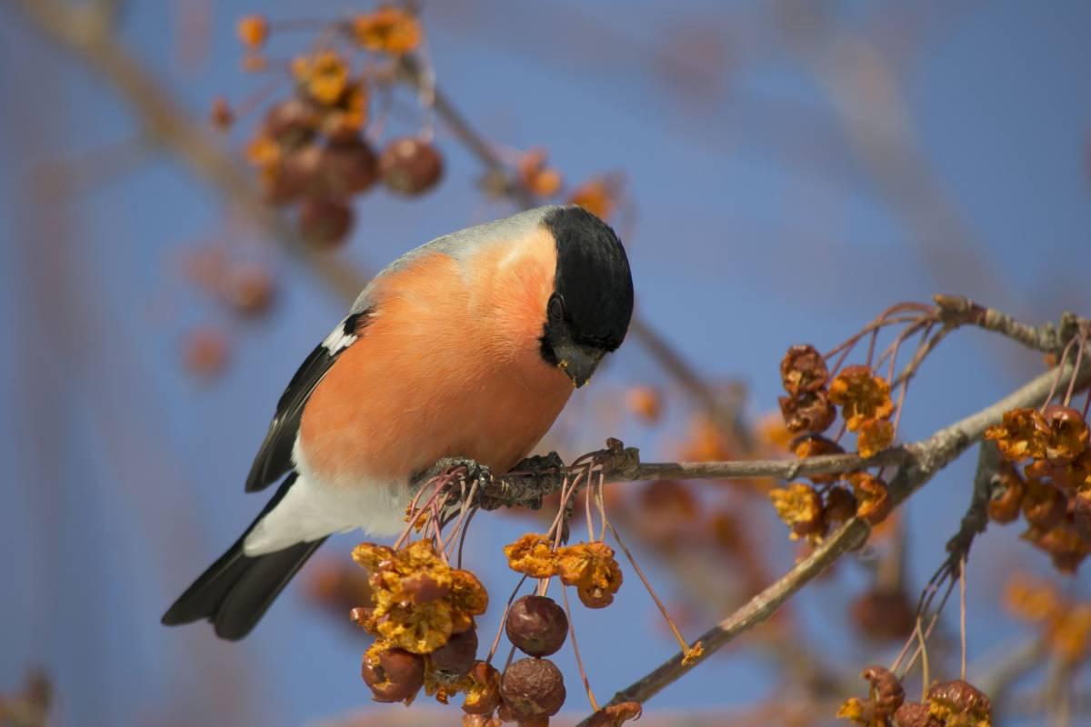 птицы тюменской области фото и названия железнодорожников это разноуровневый